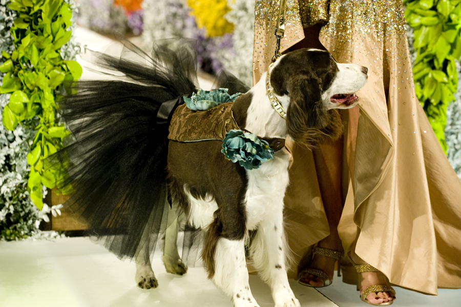 FASHION FOR PAWS 2012 (BLOG)